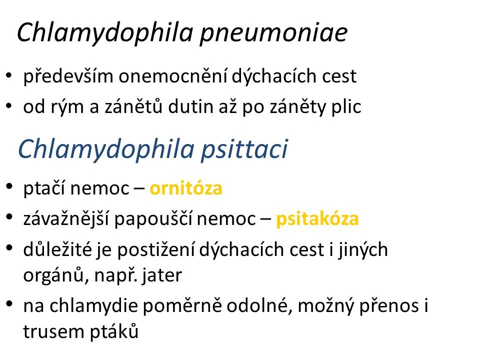 Chlamydophila pneumoniae především onemocnění dýchacích cest od rým a zánětů dutin až po záněty plic Chlamydophila psittaci ptačí nemoc – ornitóza závažnější papouščí nemoc – psitakóza důležité je postižení dýchacích cest i jiných orgánů, např.