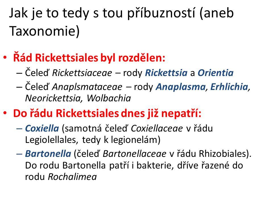 Jak je to tedy s tou příbuzností (aneb Taxonomie) Řád Rickettsiales byl rozdělen: – Čeleď Rickettsiaceae – rody Rickettsia a Orientia – Čeleď Anaplsmataceae – rody Anaplasma, Erhlichia, Neorickettsia, Wolbachia Do řádu Rickettsiales dnes již nepatří: – Coxiella (samotná čeleď Coxiellaceae v řádu Legiolellales, tedy k legionelám) – Bartonella (čeleď Bartonellaceae v řádu Rhizobiales).