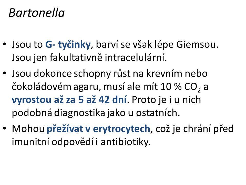 Bartonella Jsou to G- tyčinky, barví se však lépe Giemsou.