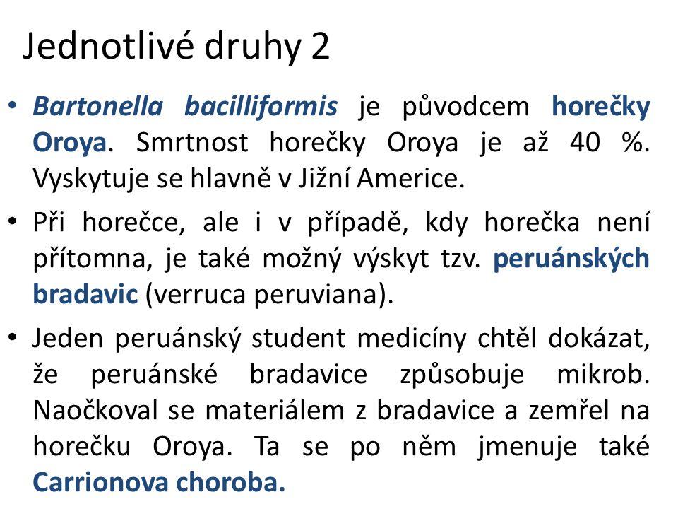 Jednotlivé druhy 2 Bartonella bacilliformis je původcem horečky Oroya.
