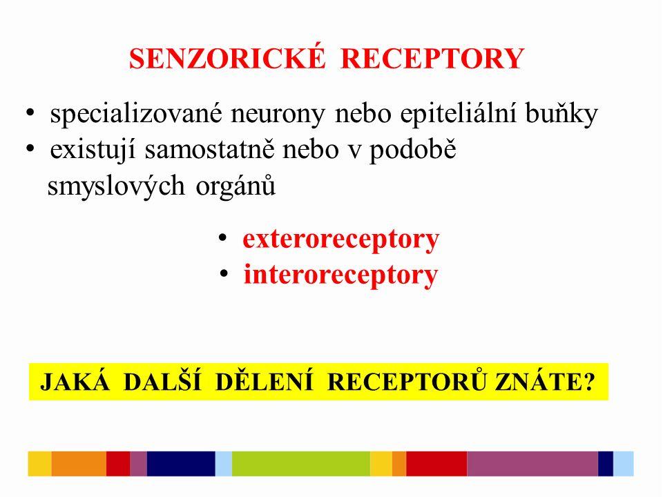 SENZORICKÉ RECEPTORY specializované neurony nebo epiteliální buňky existují samostatně nebo v podobě smyslových orgánů exteroreceptory interoreceptory