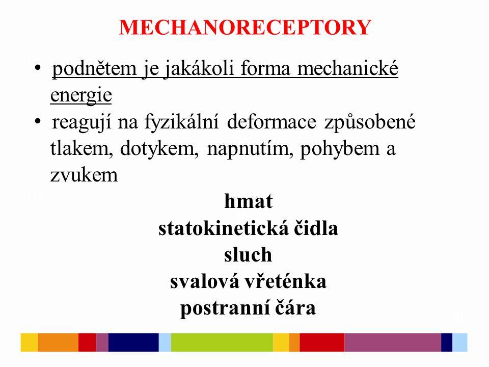MECHANORECEPTORY [9] [10] [11] [9] podnětem je jakákoli forma mechanické energie reagují na fyzikální deformace způsobené tlakem, dotykem, napnutím, p