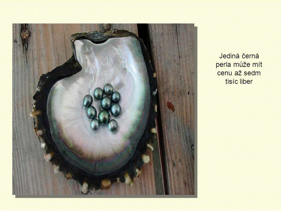 Tahitské perly jsou produkovány zvláštním druhem ústřic s černými okraji. Jsou vzácné i proto, že těchto ústřic v chovech přežívá jen malá část. Jedno