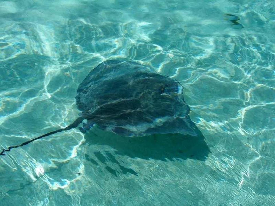 Ve vodě žije mnoho druhů pestrobarevných ryb, barakud, rejnoků, žraloků, murén, žijí tu i želvy