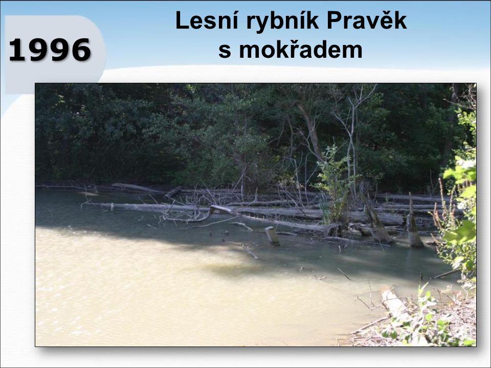 Lesní rybník Pravěk s mokřadem 1996