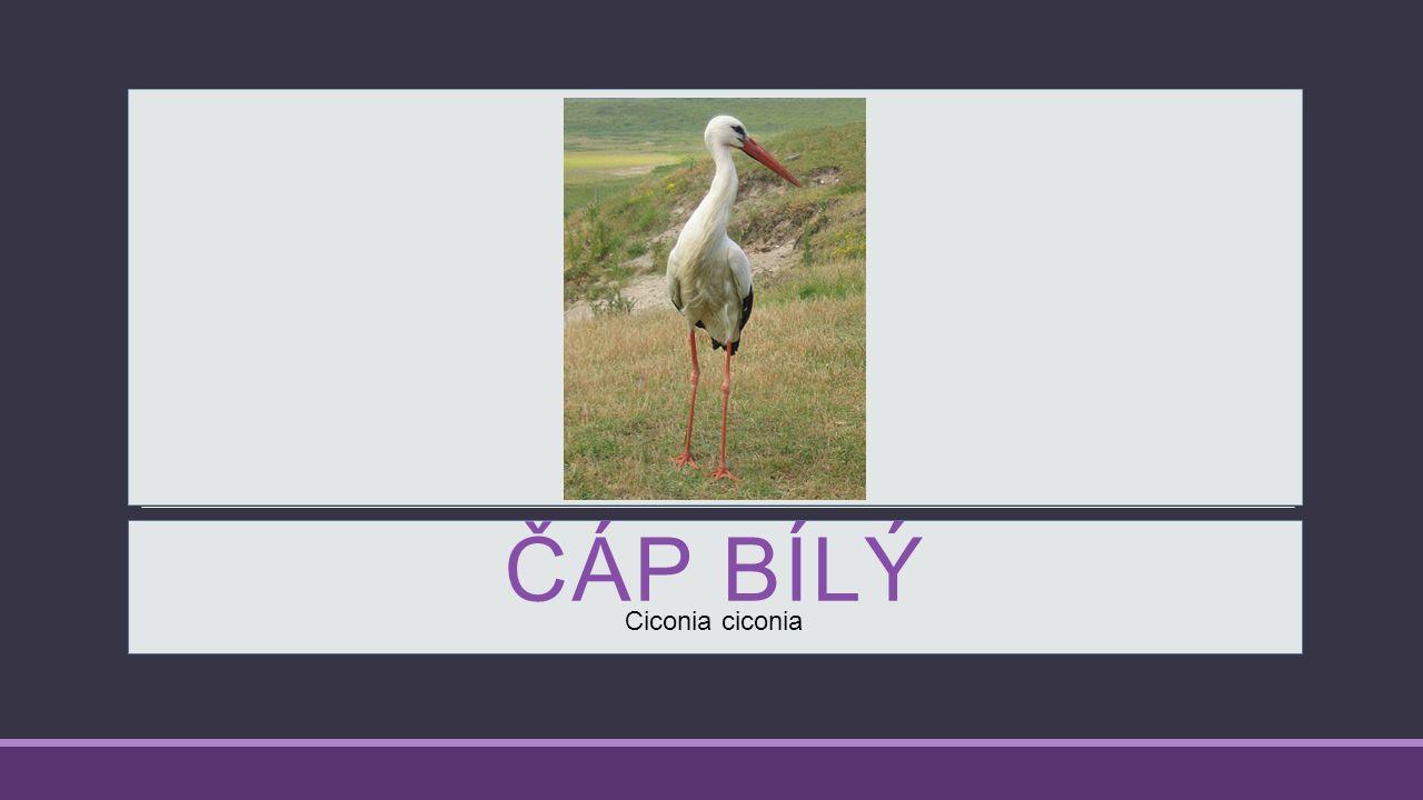 Anotace Materiál je určen jako doplněk učiva Zvířata na podzim v učivu ČaJS v 1., 2. a 3. ročníku.