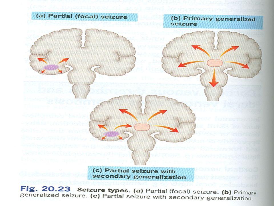 Mechanizmus účinku –Váže se na přídatnou podjednotku (α 2 -δ protein) napěťově řízených Ca ++ kanálů v CNS NÚ –Závratě, somnolence (útlum), bolest hlavy Indikace –Přídatná léčba u dospělých s parciálními záchvaty se sekundární generalizací nebo bez ní –Neuropatická bolest –Generalizovaná úzkostná porucha PREGABALIN