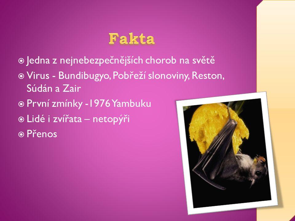  Jedna z nejnebezpečnějších chorob na světě  Virus - Bundibugyo, Pobřeží slonoviny, Reston, Súdán a Zair  První zmínky -1976 Yambuku  Lidé i zvířata – netopýři  Přenos