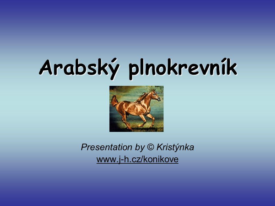 Arabský plnokrevník Presentation by © Kristýnka www.j-h.cz/konikove