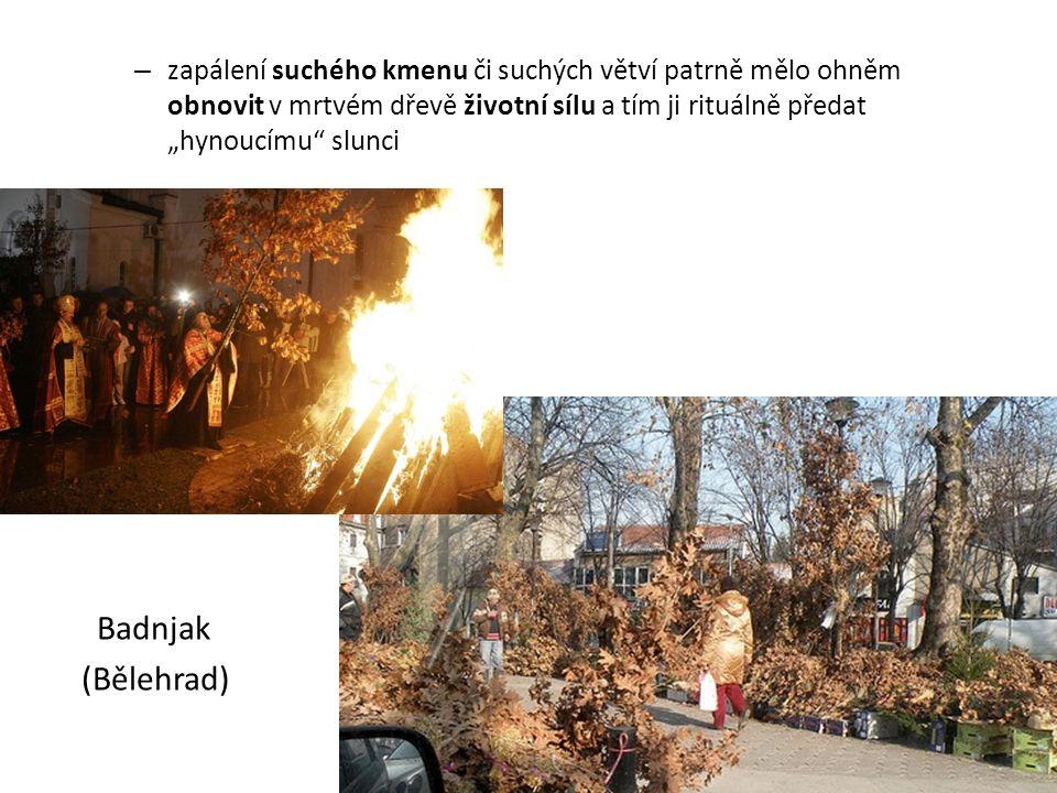 """– zapálení suchého kmenu či suchých větví patrně mělo ohněm obnovit v mrtvém dřevě životní sílu a tím ji rituálně předat """"hynoucímu"""" slunci Badnjak (B"""