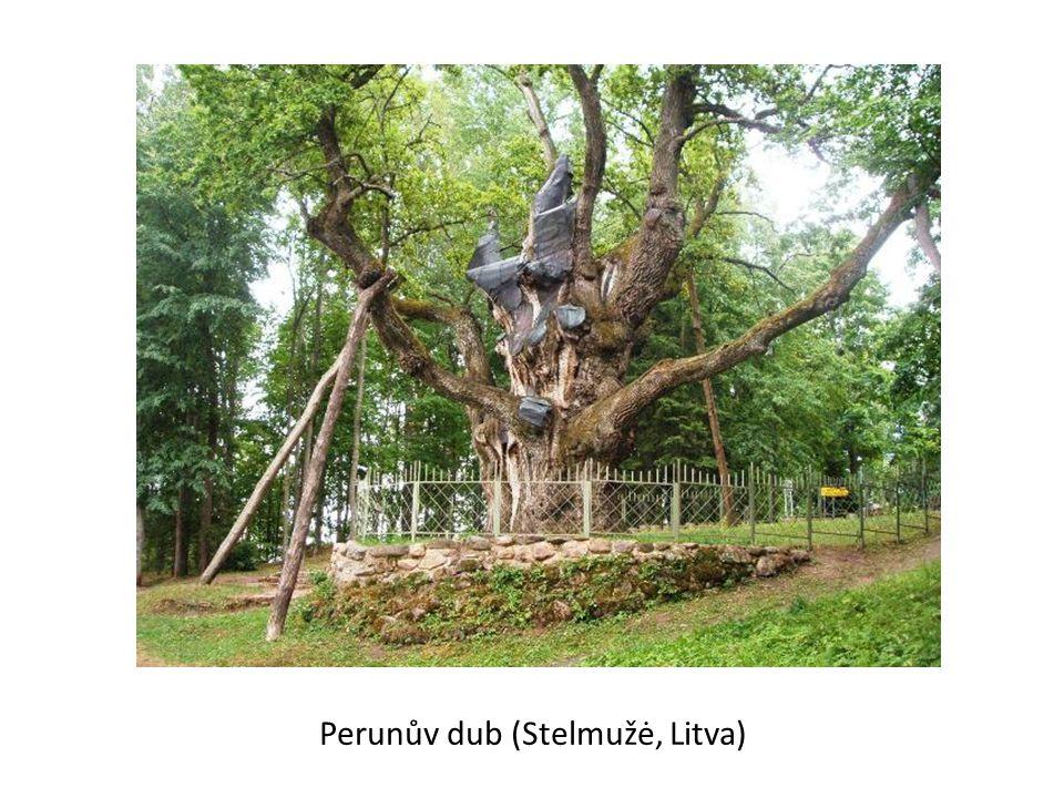 Perunův dub (Stelmužė, Litva)