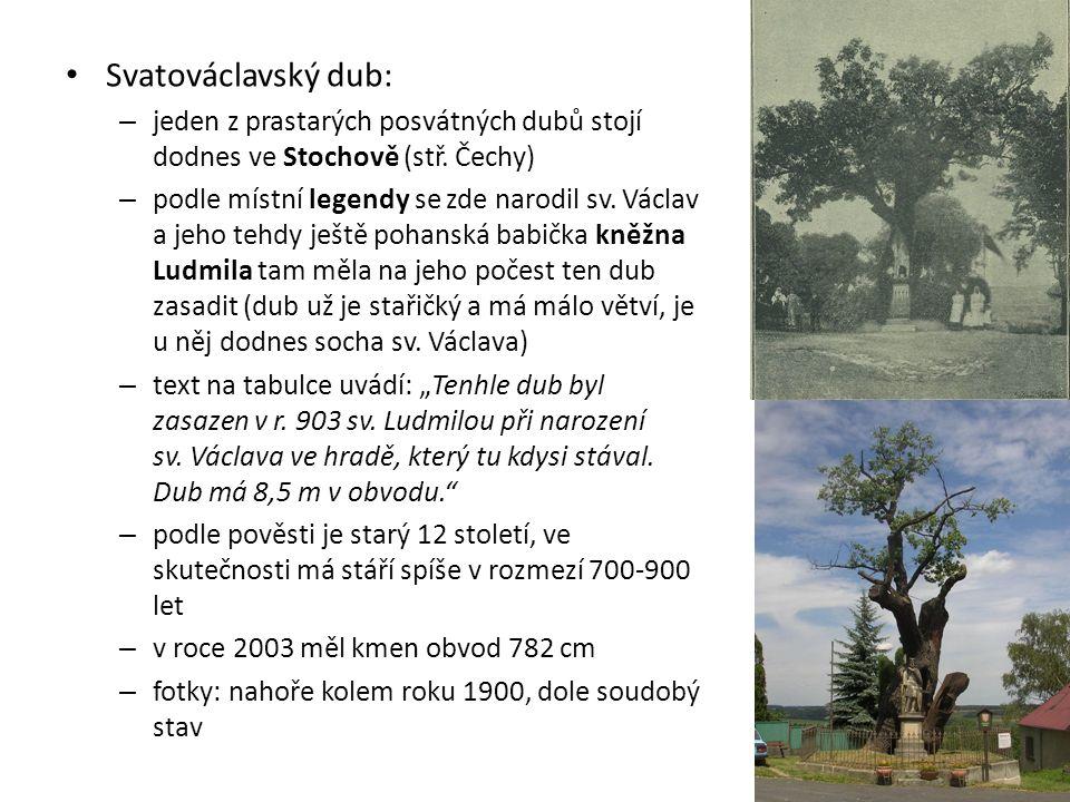 Svatováclavský dub: – jeden z prastarých posvátných dubů stojí dodnes ve Stochově (stř. Čechy) – podle místní legendy se zde narodil sv. Václav a jeho
