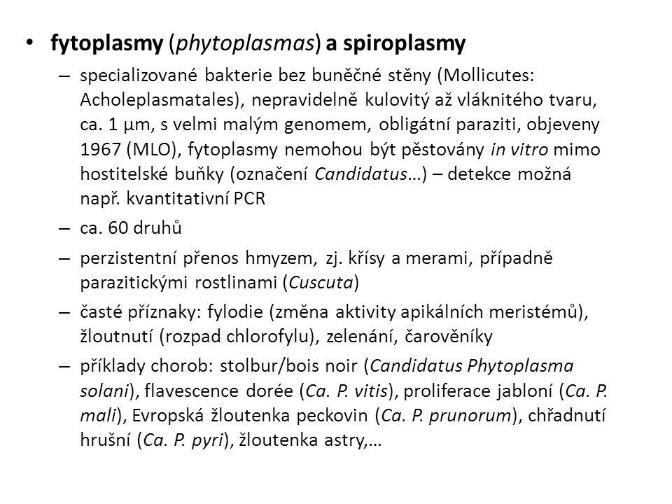 fytoplasmy (phytoplasmas) a spiroplasmy – specializované bakterie bez buněčné stěny (Mollicutes: Acholeplasmatales), nepravidelně kulovitý až vláknitého tvaru, ca.