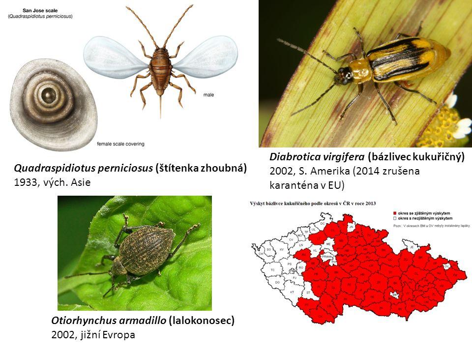 Quadraspidiotus perniciosus (štítenka zhoubná) 1933, vých.