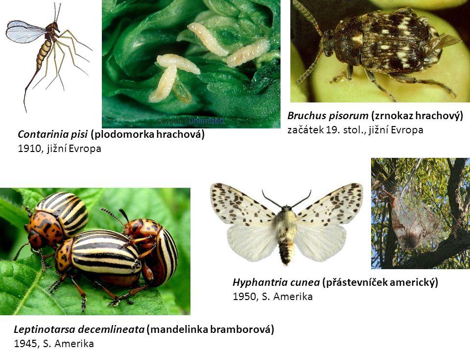 Contarinia pisi (plodomorka hrachová) 1910, jižní Evropa Leptinotarsa decemlineata (mandelinka bramborová) 1945, S.