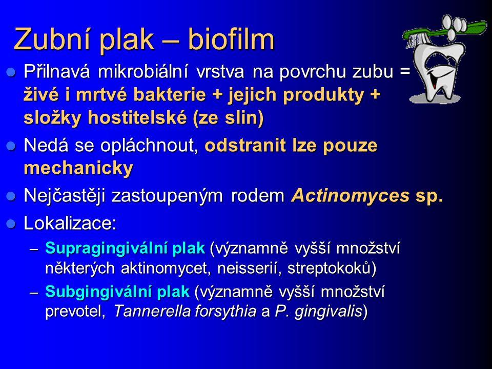 Zubní plak – biofilm Přilnavá mikrobiální vrstva na povrchu zubu = živé i mrtvé bakterie + jejich produkty + složky hostitelské (ze slin) Přilnavá mikrobiální vrstva na povrchu zubu = živé i mrtvé bakterie + jejich produkty + složky hostitelské (ze slin) Nedá se opláchnout, odstranit lze pouze mechanicky Nedá se opláchnout, odstranit lze pouze mechanicky Nejčastěji zastoupeným rodem Actinomyces sp.