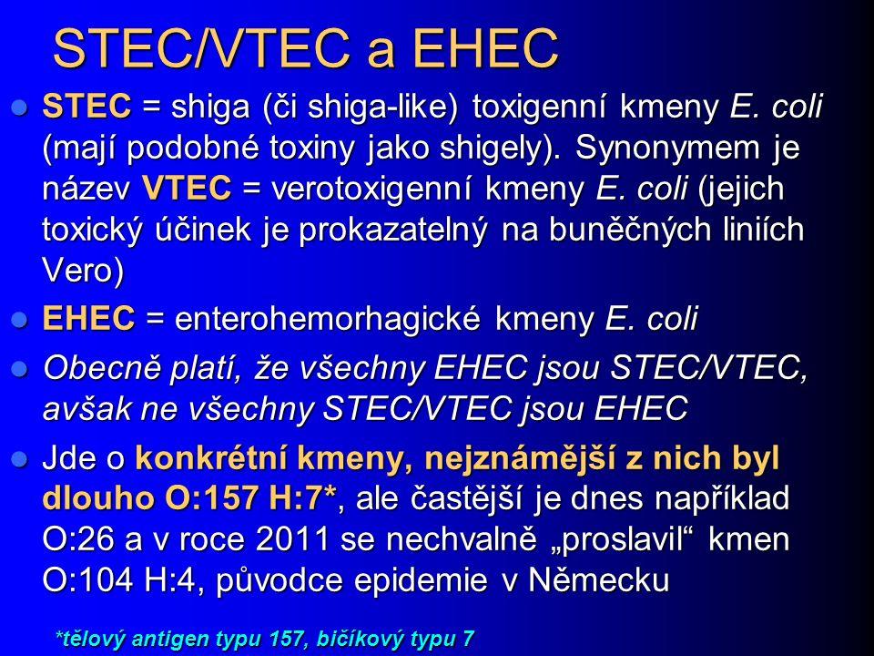 STEC/VTEC a EHEC STEC = shiga (či shiga-like) toxigenní kmeny E.
