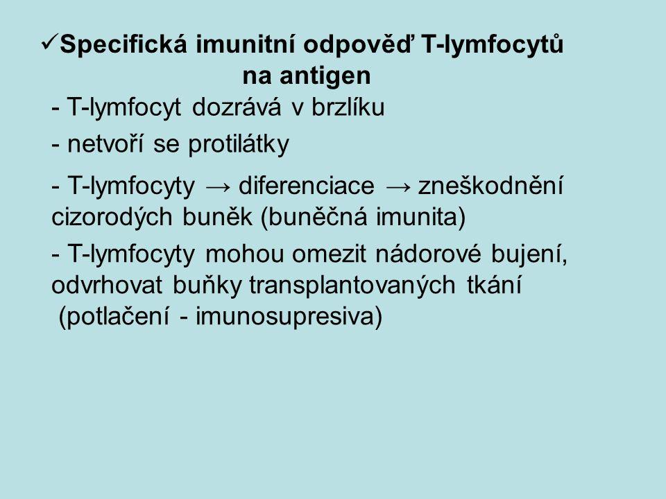Specifická imunitní odpověď T-lymfocytů na antigen - netvoří se protilátky - T-lymfocyty → diferenciace → zneškodnění cizorodých buněk (buněčná imunita) - T-lymfocyty mohou omezit nádorové bujení, odvrhovat buňky transplantovaných tkání (potlačení - imunosupresiva) - T-lymfocyt dozrává v brzlíku