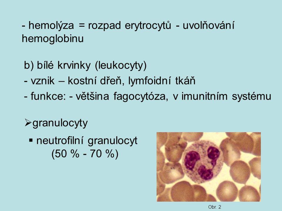 - hemolýza = rozpad erytrocytů - uvolňování hemoglobinu b) bílé krvinky (leukocyty) - vznik – kostní dřeň, lymfoidní tkáň - funkce: - většina fagocytó