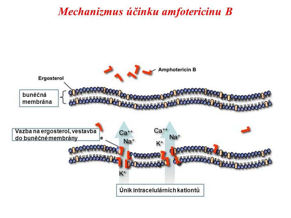 Mechanizmus účinku amfotericinu B Vazba na ergosterol, vestavba do buněčné membrány Únik intracelulárních kationtů buněčná membrána