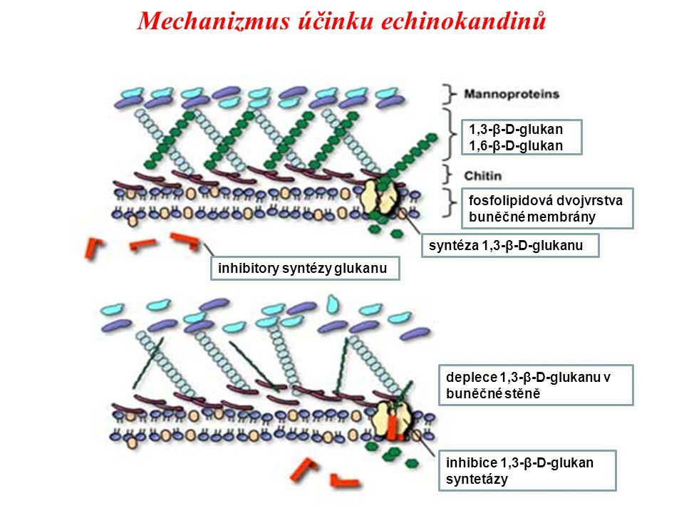 Mechanizmus účinku echinokandinů fosfolipidová dvojvrstva buněčné membrány deplece 1,3-β-D-glukanu v buněčné stěně inhibice 1,3-β-D-glukan syntetázy syntéza 1,3-β-D-glukanu inhibitory syntézy glukanu 1,3-β-D-glukan 1,6-β-D-glukan