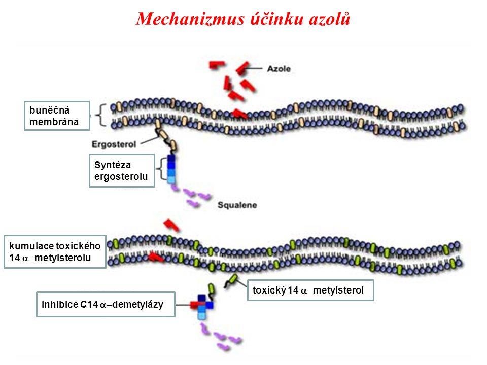 Mechanizmus ú činku azolů Inhibice C14  demetylázy kumulace toxického 14  metylsterolu buněčná membrána toxický 14  metylsterol Syntéza ergosterolu