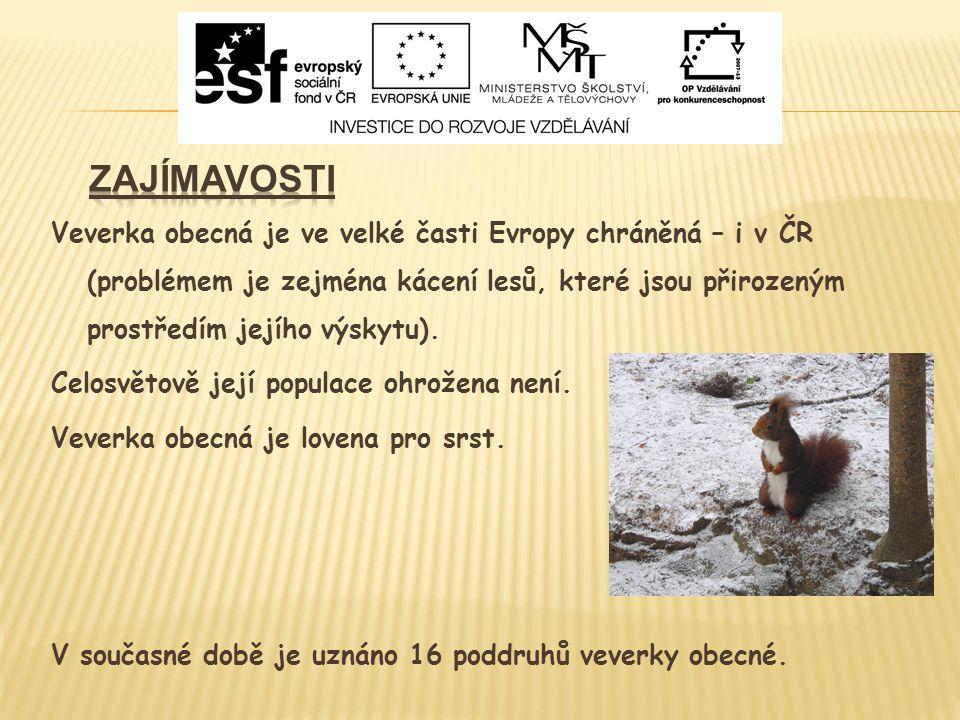 Veverka obecná je ve velké časti Evropy chráněná – i v ČR (problémem je zejména kácení lesů, které jsou přirozeným prostředím jejího výskytu).