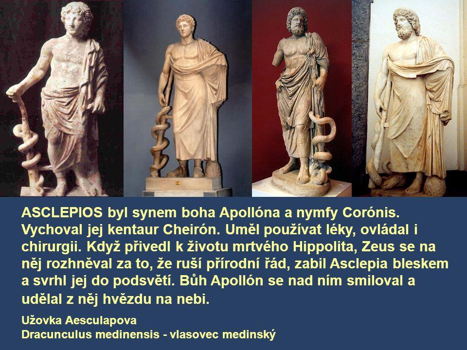 Užovka Aesculapova Dracunculus medinensis - vlasovec medinský ASCLEPIOS byl synem boha Apollóna a nymfy Corónis.