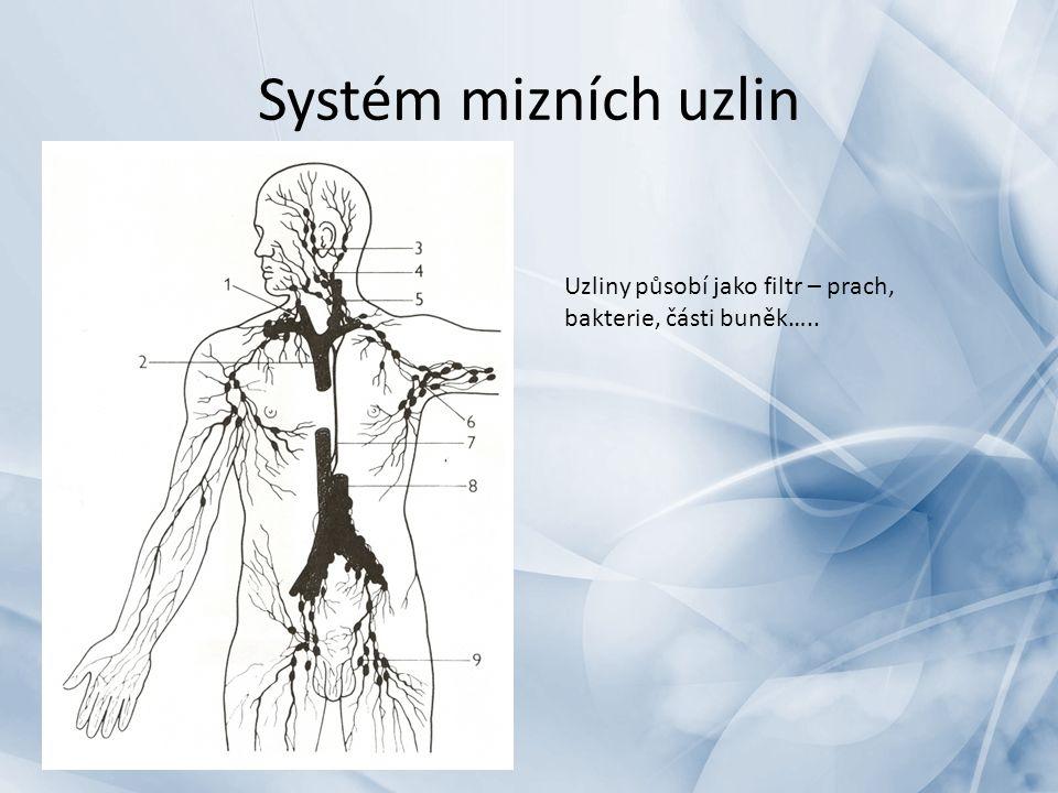 Systém mizních uzlin Uzliny působí jako filtr – prach, bakterie, části buněk…..