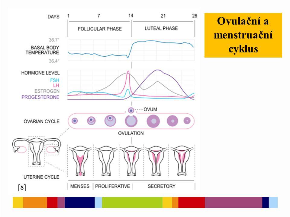 Ovulační a menstruační cyklus [8]