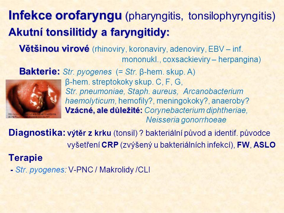 Infekce orofaryngu ( Infekce orofaryngu (pharyngitis, tonsilophyryngitis) Akutní tonsilitidy a faryngitidy: Většinou virové Většinou virové (rhinoviry