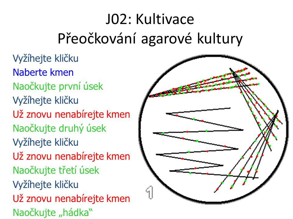 J02: Kultivace Přeočkování agarové kultury Vyžíhejte kličku Naberte kmen Naočkujte první úsek Vyžíhejte kličku Už znovu nenabírejte kmen Naočkujte dru