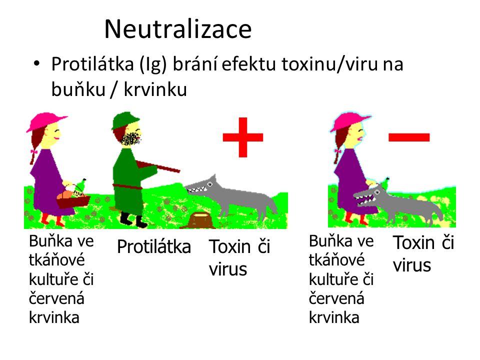 Neutralizace Protilátka (Ig) brání efektu toxinu/viru na buňku / krvinku Buňka ve tkáňové kultuře či červená krvinka Toxin či virus Protilátka +– Buňk