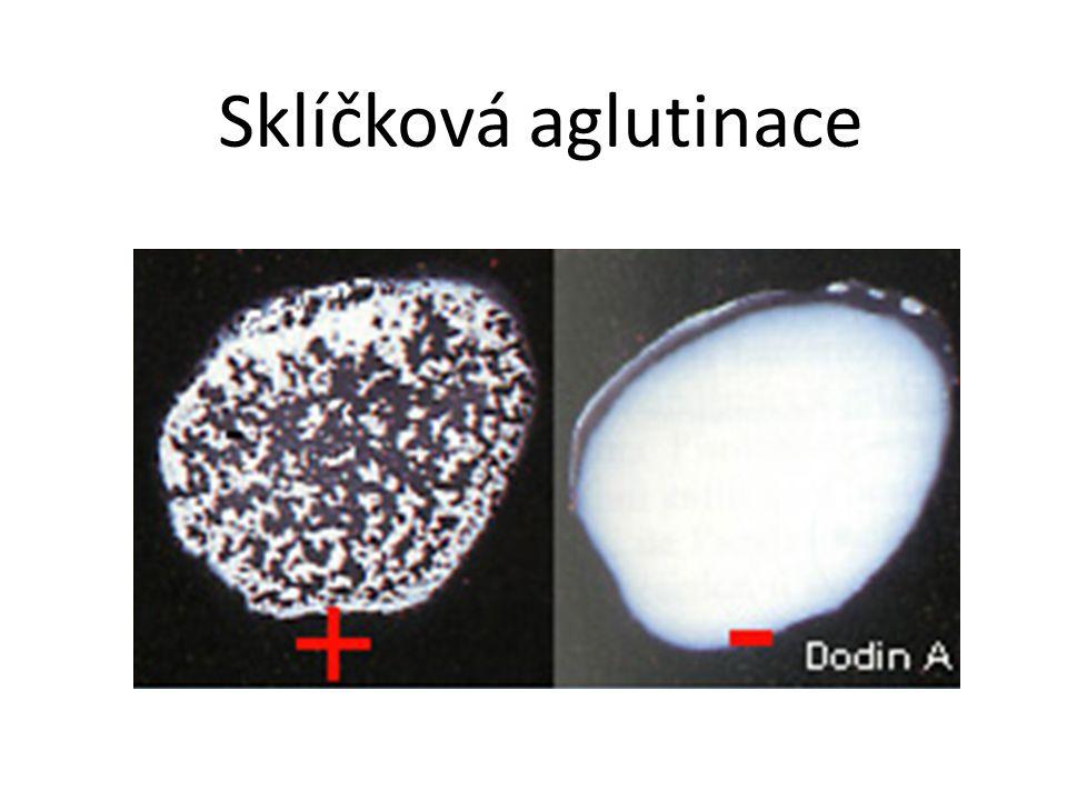 Sklíčková aglutinace