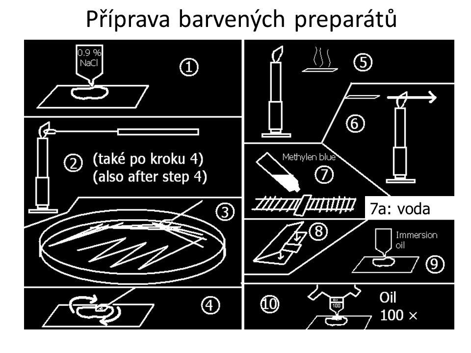 Příprava barvených preparátů 7a: voda