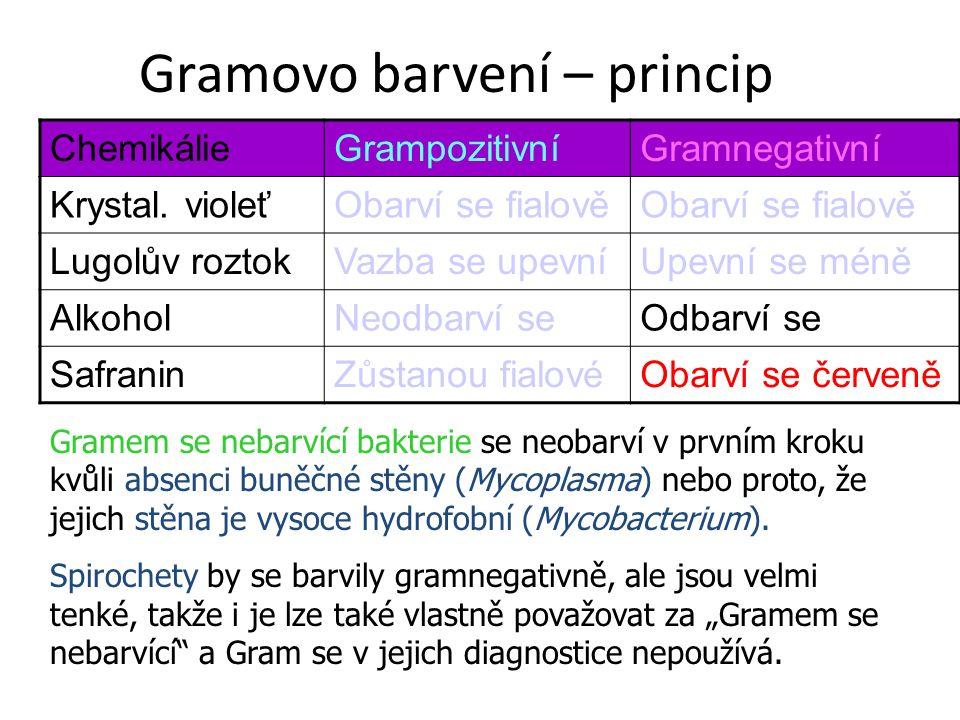 Gramovo barvení – princip ChemikálieGrampozitivníGramnegativní Krystal. violeťObarví se fialově Lugolův roztokVazba se upevníUpevní se méně AlkoholNeo