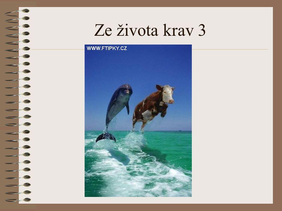 Ze života krav 3
