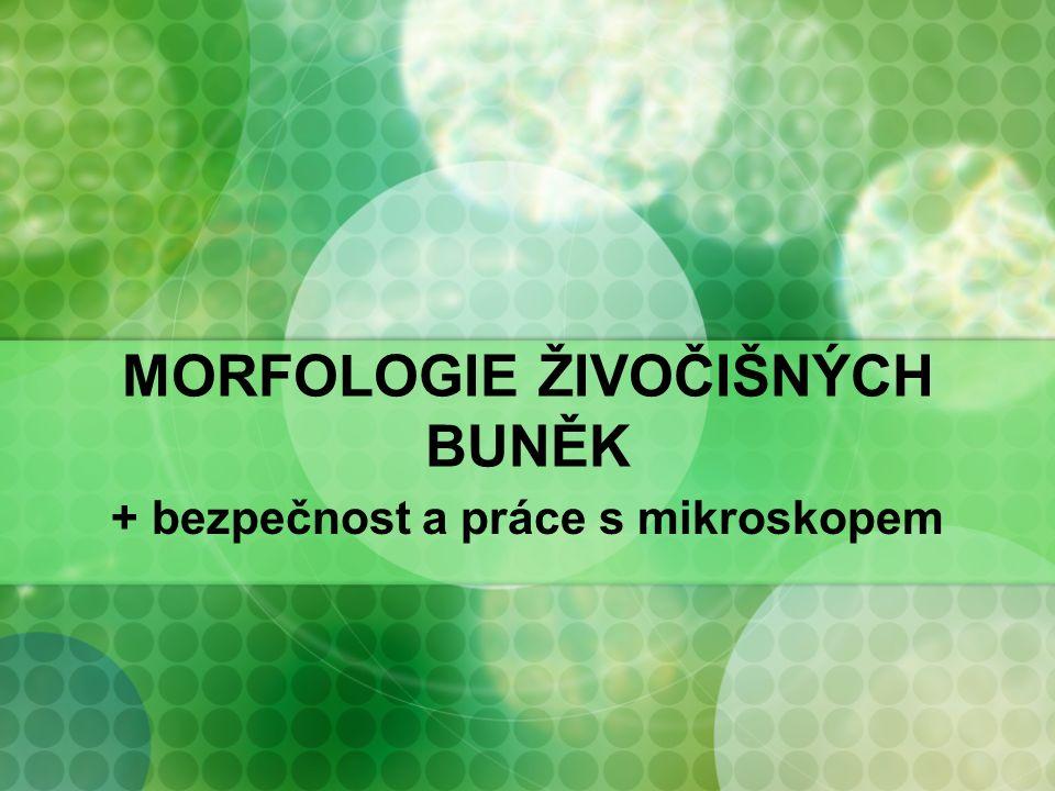 MORFOLOGIE ŽIVOČIŠNÝCH BUNĚK + bezpečnost a práce s mikroskopem