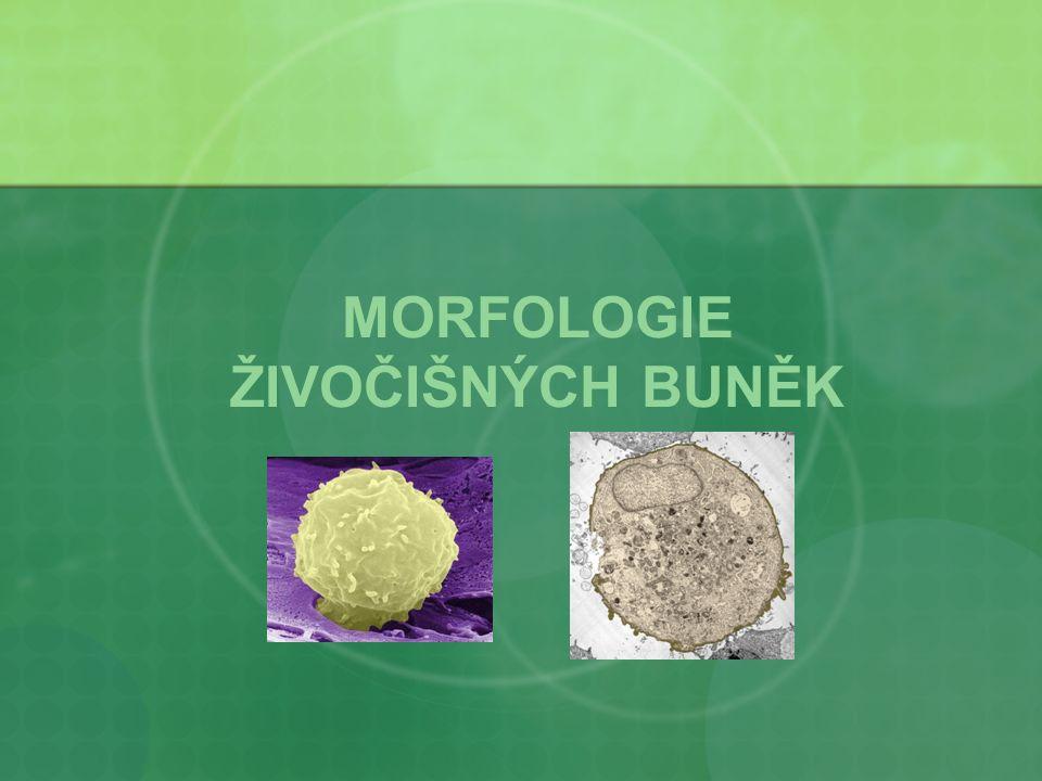 PROKARYOTA pro – jádro, karyon - jádro bakterie, archebakterie, sinice semipermeabilní membrána nukleoid (kružnicová DNA) plasmidy ribosomy 70S (30S + 50S) bez organel 0,1-10μm