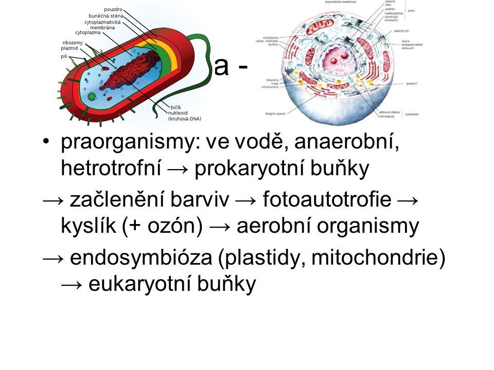 3. etapa - buněčná praorganismy: ve vodě, anaerobní, hetrotrofní → prokaryotní buňky → začlenění barviv → fotoautotrofie → kyslík (+ ozón) → aerobní o