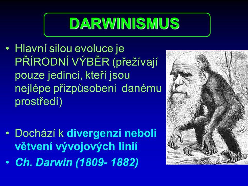 DARWINISMUS Hlavní silou evoluce je PŘÍRODNÍ VÝBĚR (přežívají pouze jedinci, kteří jsou nejlépe přizpůsobeni danému prostředí) Dochází k divergenzi ne