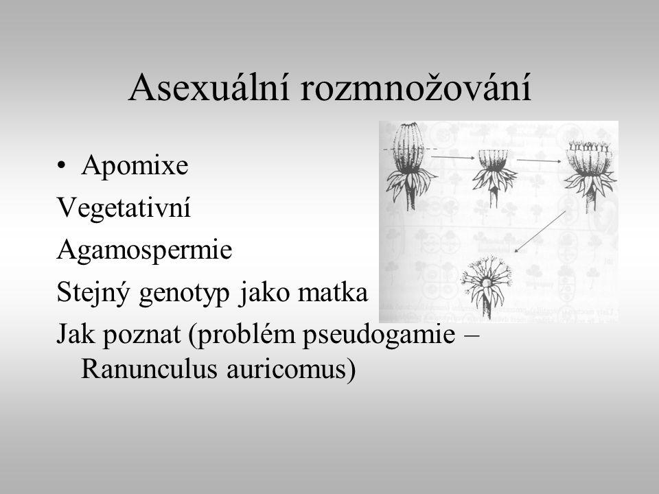 Asexuální rozmnožování Apomixe Vegetativní Agamospermie Stejný genotyp jako matka Jak poznat (problém pseudogamie – Ranunculus auricomus)