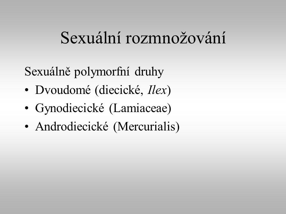 Sexuální rozmnožování Sexuálně polymorfní druhy Dvoudomé (diecické, Ilex) Gynodiecické (Lamiaceae) Androdiecické (Mercurialis)