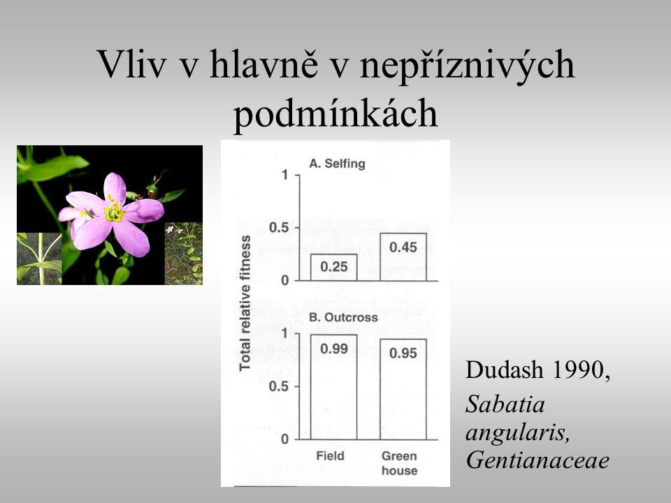 Vliv v hlavně v nepříznivých podmínkách Dudash 1990, Sabatia angularis, Gentianaceae