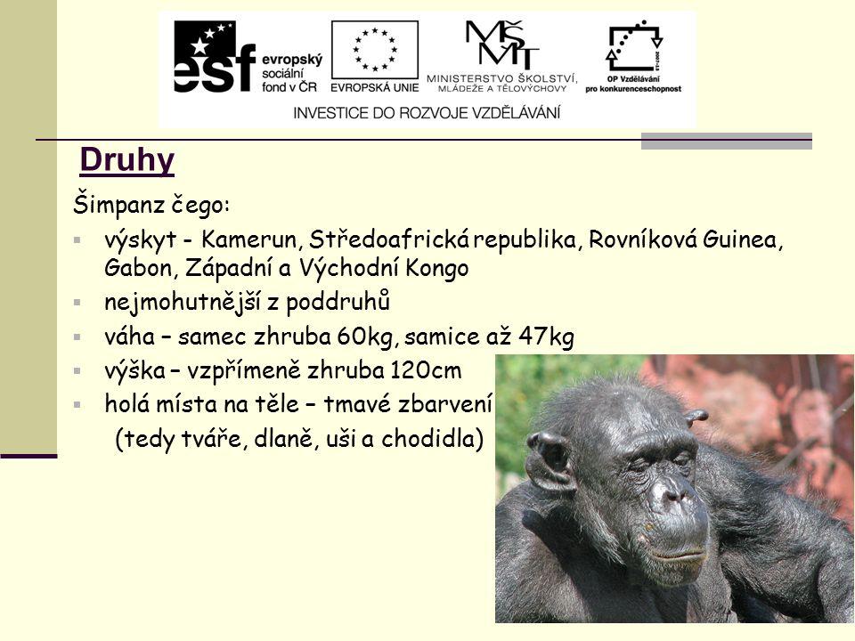 Druhy Šimpanz čego:  výskyt - Kamerun, Středoafrická republika, Rovníková Guinea, Gabon, Západní a Východní Kongo  nejmohutnější z poddruhů  váha –