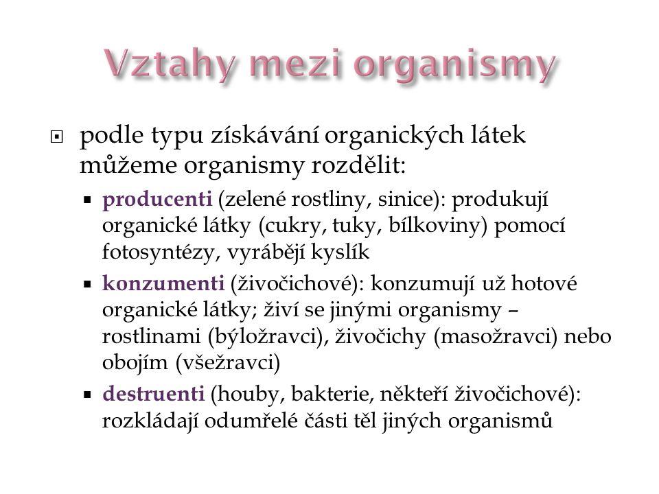  podle typu získávání organických látek můžeme organismy rozdělit:  producenti (zelené rostliny, sinice): produkují organické látky (cukry, tuky, bí