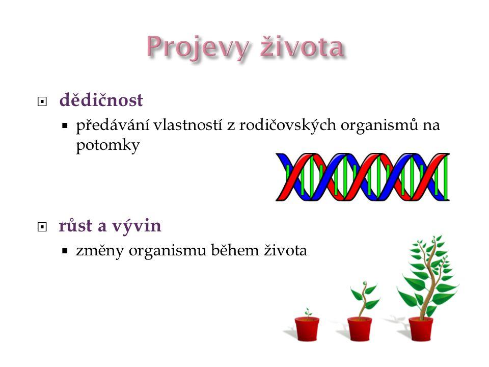  dědičnost  předávání vlastností z rodičovských organismů na potomky  růst a vývin  změny organismu během života