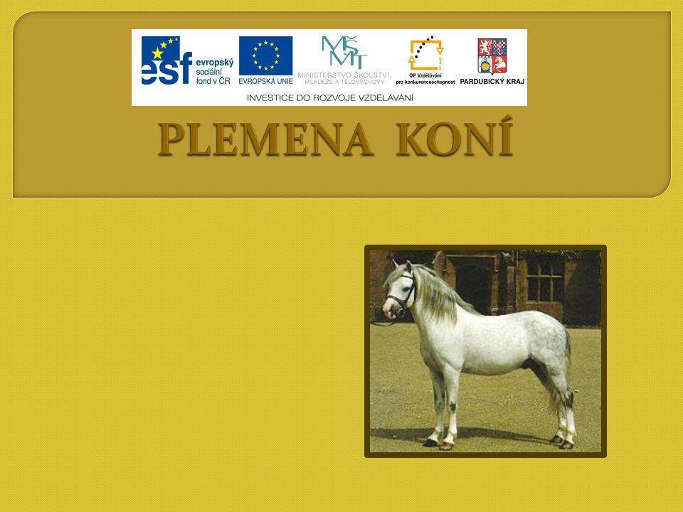 Rozdělení podle fylogenetického původu do 4 plemenných skupin: a)Skupina koní stepních (mongolských) b) Skupina koní orientálních (východních) – podskupina íránských koní – podskupina arabských koní – podskupina tarpánovitých koní – podskupina starošpanělských koní – podskupina anglických koní c)Skupina koní okcidentálních (západních) d)Skupina koní nordických (severských)