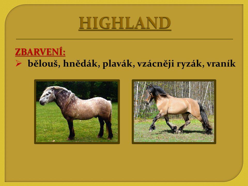 POUŽITÍ:  j  jízda koňmo, jízda vozmo  soumar (unese i 120kg)  při honech (střílení přímo ze hřbetu koně, odnesení ulovené zvěře)  všestranné – hlavně v horských oblastech