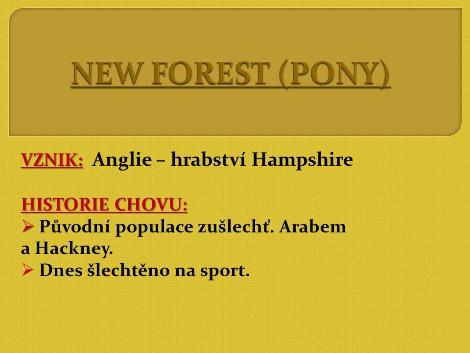 POPIS:   ušlechtilý, harmonický pony (122 - 144cm)  2 typy: menší = 125cm větší = 140cm